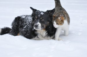CanEVA: How To Make Winter Enjoyable For Your Pets