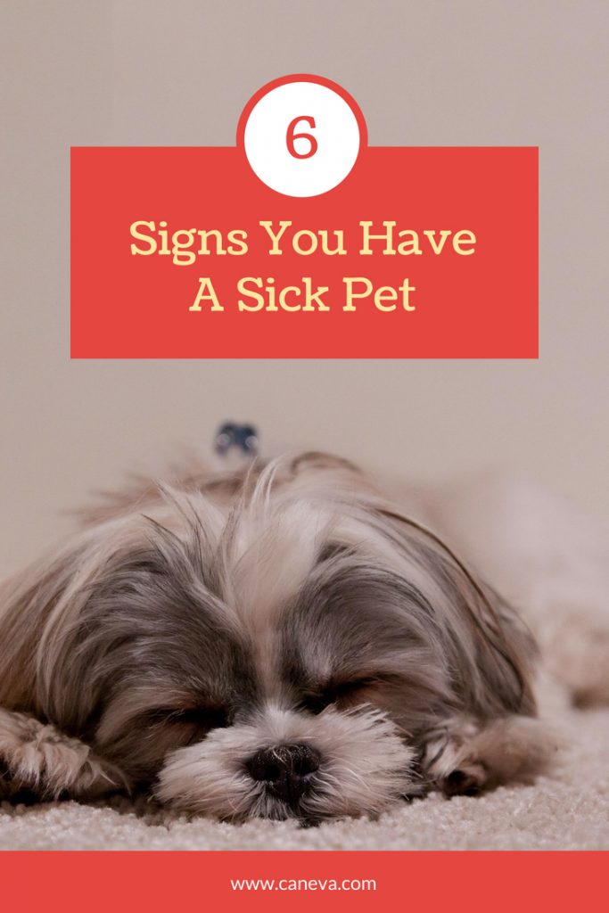 CanEVA Signs You Have A Sick Pet